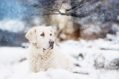 🔘 Best Album ➖ 21/12/2017                         📍ISSUE ▪️ Week 41 – Official Site  – GSP MAGAZINE Labrador Retriever, 21st, Magazine, Album, Dogs, Animals, Labrador Retrievers, Animales, Animaux