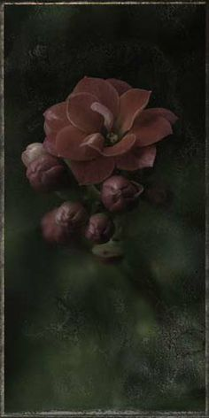 """Flowers In Neutral Moment-2 """"Kalanchoe"""" Archival pigment print Photo by Soichi Oshika"""