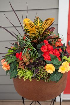 Our container garden templates can help you create beautiful designs for every season, with carefully chosen plant combinations that complement each other. Flower Pots, Container Gardening Vegetables, Plants, Dish Garden, Fall Container Gardens, Container Flowers, Plant Decor, Garden Design, Summer Planter
