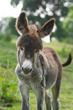 Donkey! did his mom trim his bangs? lol