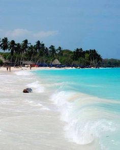 Playa Blanca, Cartagena, Colombia - Pin for my brother, Kimball, when he misses Cartegena! Dream Vacations, Vacation Spots, Places To Travel, Places To See, Travel Destinations, Places Around The World, Around The Worlds, Colombia Travel, South America Travel