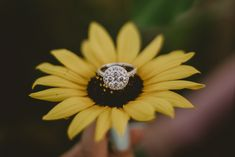 We're Engaged! Now What? Wedding Planner, Destination Wedding, Wedding Venues, Engaged Now What, Engagement Photos, Engagement Rings, Love You The Most, Ring Shots, Wedding Pinterest