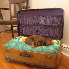 Old suitcase made into dog beds... This is so cute....