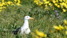 Ocean sea bird islan