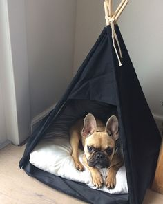 French Bulldog Puppy ❤️ #Bulldog #PuppyHouses