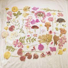 Table spread of dried flowers  #DearTopshop