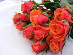 Orangey rózsa készlet 2 OsorrisStock