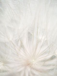 white and pale aesthetic All White, Pure White, Art Blanc, Dandelion Wish, White Dandelion, Dandelion Seeds, Deco Nature, Jolie Photo, Shades Of White