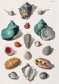 Coloured shells illustration