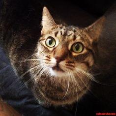Green Eyes - http://cutecatshq.com/cats/green-eyes/