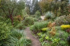 Contrasting shapes and textures at Western Hills Garden  (Dasylirion - spikey plant in the back)