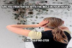 Mold Remediation Baltimore  443-961-2725  Mold Removal Baltimore