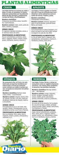 hojas de chaya para la diabetes