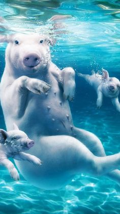 How about when pigs swim