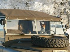 ANOTHER PHOTO OF THE SERIES THE LANDY  BELONGS TO MY DOG