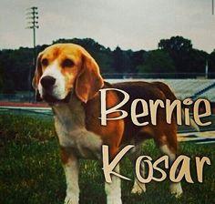 Bernie Kosar Dog Breed