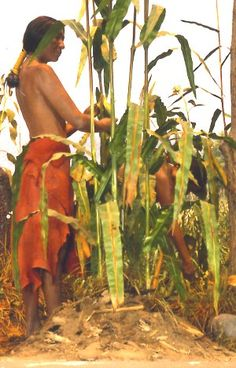 Chapter 16 Section 3- The Indian way of life shaped new culture that emerged in North America. Settlers learned how to grow corn, beans, and squash from the Indians. They also learned how to hunt and trap animals.