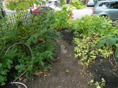 Toronto garden staging/fall garden cleanup in Mount Pleasant West/Davisville Paul Jung, Toronto Gardens, Toronto Houses, Tree Surgeons, Gardening Services, Mount Pleasant, Before And After Pictures, Autumn Garden, Weeding