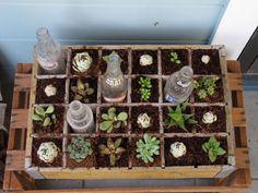 Vintage Container Garden -what a great idea! Sedums will work best.