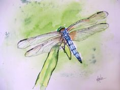 colorful pictures of dragon flies | Let's Paint the Blue Dasher Dragonfly! | Let's Paint Nature!