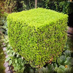 Cubist Hedge (or, a Minecraft Green Block) | by Schill