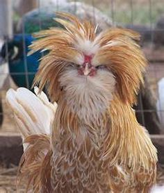 You think you're having a bad hair day?