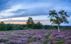 15 photographs that prove the New Forest is Britain's most underrated national park