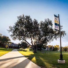 The campus green at sunrise, Augustana University