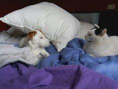 Fuori dal mio letto!