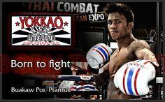MMA Udstyr - Kampsportsudstyr - Streetwear - MMA, Boksning, Muay Thai, Karate, Taekwondo, BJJ