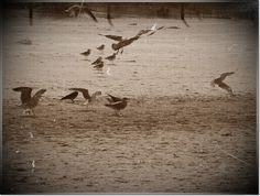 birds on the beach by Katia79 on DeviantArt