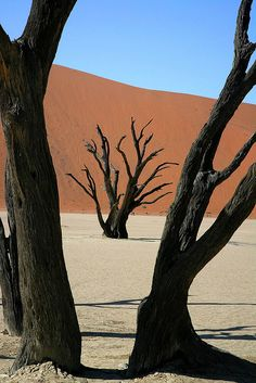 Dead Tree and Desert Dune, Sossusvlei, Namibia   by peo pea, via Flickr