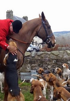 The end of the season with the Fife Foxhounds - great pics from Helen Laverack