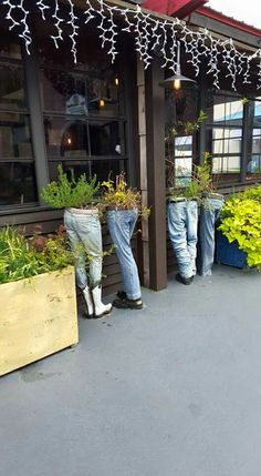 Jean planters