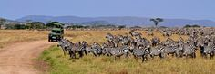 Tanzania Safaris with Licious Adventure Ltd  by Licious Adventure