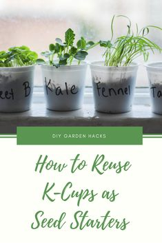 How to Reuse K-Cups as Seed Starters