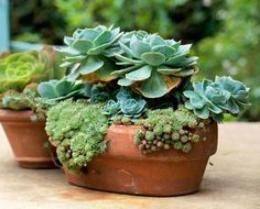 30 Beautiful Container Gardens | Midwest Living