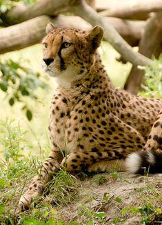 Afrikka, Kenia, Safari, Luonto, Loma, Kansallispuisto