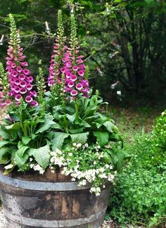 Cottage Garden- 8 things to know about Foxgloves - French Co.- Cottage Garden- 8 things to know about Foxgloves – French Country Cottage Cottage Garden- 8 things to know about Foxgloves – FRENCH COUNTRY COTTAGE - Cottage Garden Plants, Garden Pots, Small Cottage Garden Ideas, Balcony Garden, Wine Barrel Planter, Wine Barrel Garden, French Country Cottage, Country Uk, French Cottage Garden