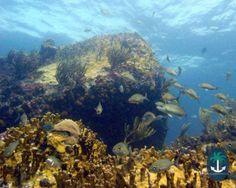 The Invisibles dive site