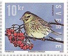Filatelia: Avecillas en sellos suecos: Emberiza citrinella