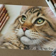 WANT A SHOUTOUT ? CLICK LINK IN MY PROFILE !!! Tag #DRKYSELA Repost from @jk_cpdrawing polychromos and luminance colored pencils on strathmore bristol paper. #catportrait#petportrait#art#cp_art#artwork#colorpencil#colorpencildrawing#animalart#awesome_cp#animalcreatives#arts_help#worldofpencils#고양이#냥스타그램#반려묘초상화#그림스타그램#취미미술#색연필화#색연필일러스트#그림#색연필드로잉#손그림 via http://instagram.com/zbynekkysela
