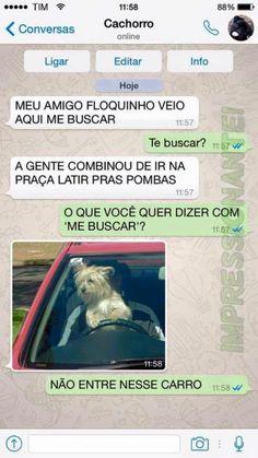 15 conversas que você teria com seu cachorro se ele usasse WhatsApp - Mega Curioso 100 Memes, Funny Memes, Why God Why, Dark Jokes, Little Memes, Bd Comics, Bad Mood, Marvel Memes, Like A Boss