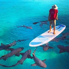 Paddle boarding with a few welcome guests