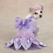 We love using CommonScents LAVENDER Essential Oil to calm down our little 5 lb Chihuahua when she stresses out!