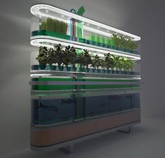Aquaponic System... I would love to have this set up at my house! I love the symbiotic relationship between the plants and fish.