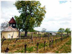 Heiliger Stein in Mitterretzbach, Weinviertel, Österreich Austria, Places To Visit, Backyard, Cabin, House Styles, Travel, Coffeehouse, Stones, Yard