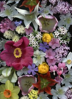 54285-01 bouquet | Flickr - Photo Sharing!