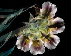 Adam Savitch Photo Memory of Blossoms