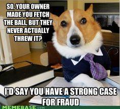 Lawyer-ed!